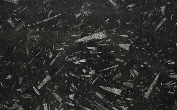Black Fossil Limestone : Black fossil pmp